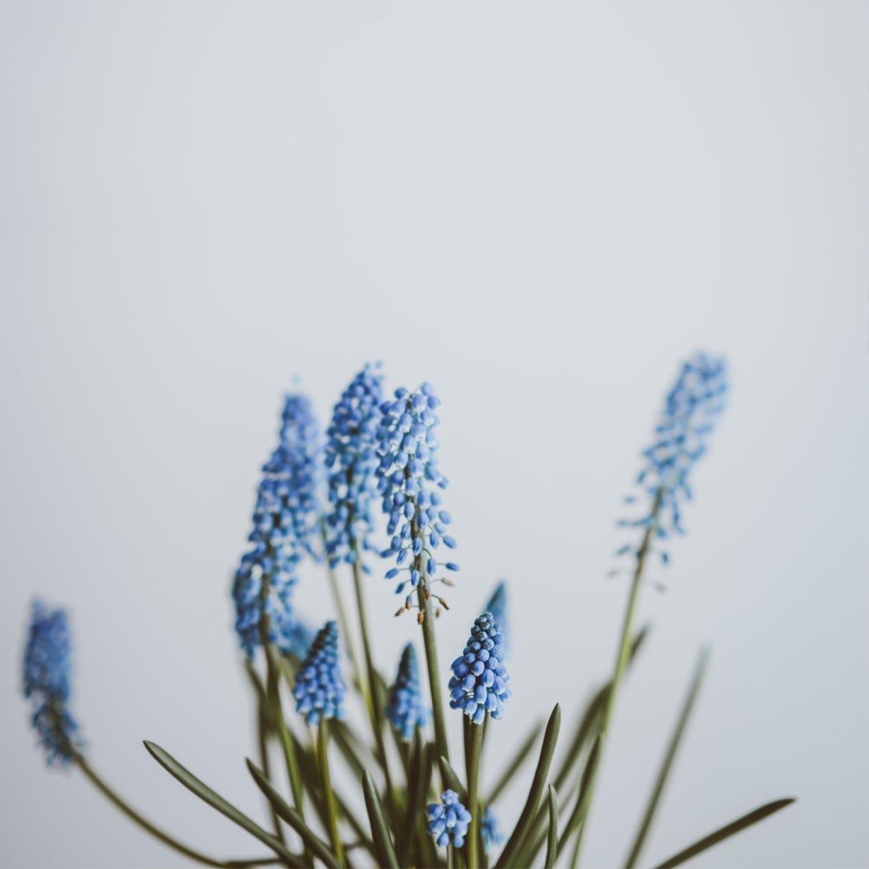 flowers-2
